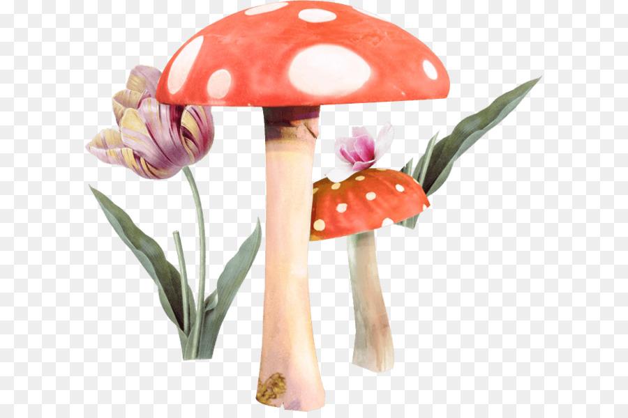 Цветы и грибы картинки для детей