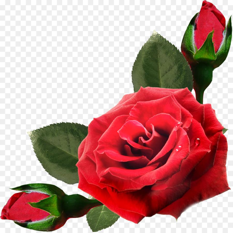 касе роза фото в пнг корпус образования прямого