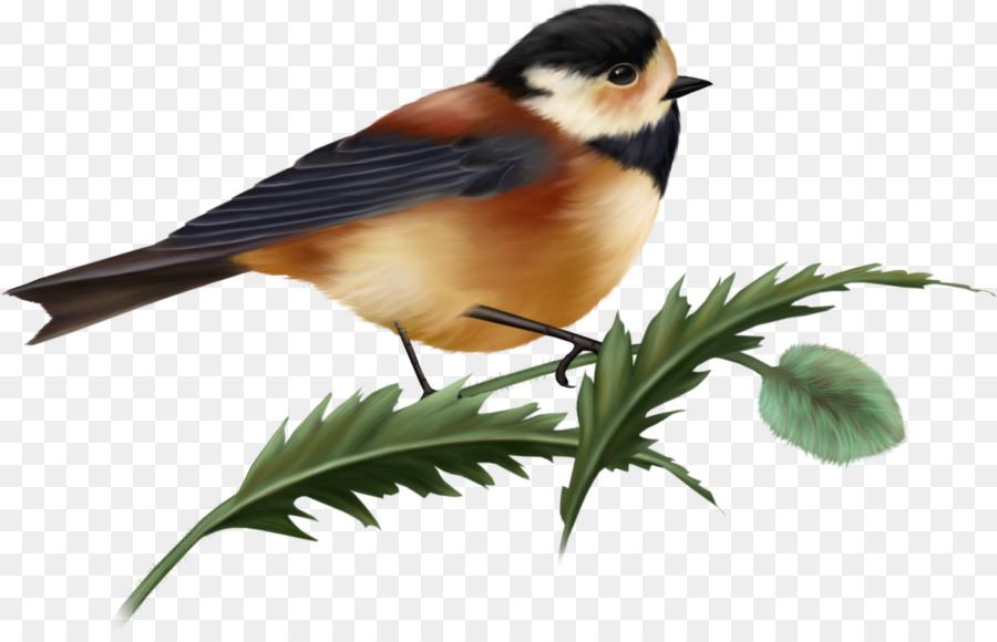 Птицы пнг картинки