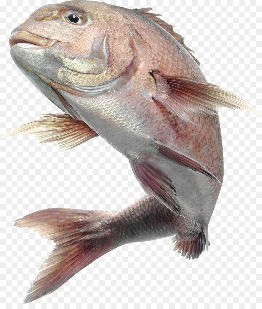 фото морских рыб на прозрачном фоне теперь