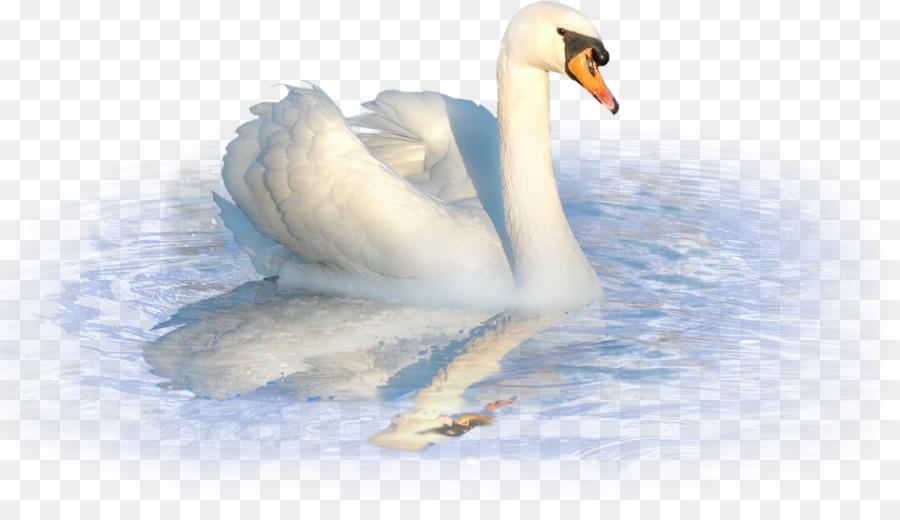 Картинка на белом фоне лебедь