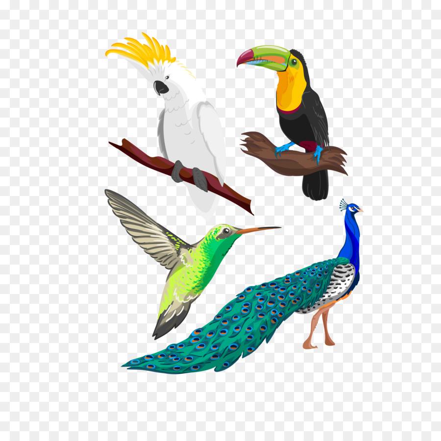 тропическая птица рисунок люди