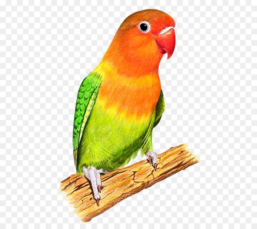 Путиным, попугай картинка для детей