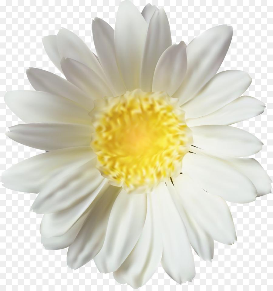 хризантема,