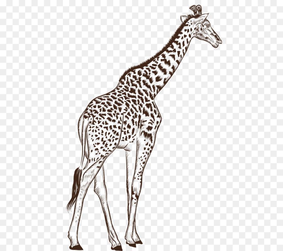 Жираф чб картинка