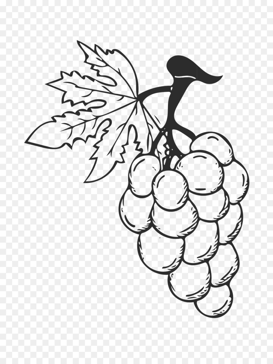 Картинки виноградной лозы для срисовки