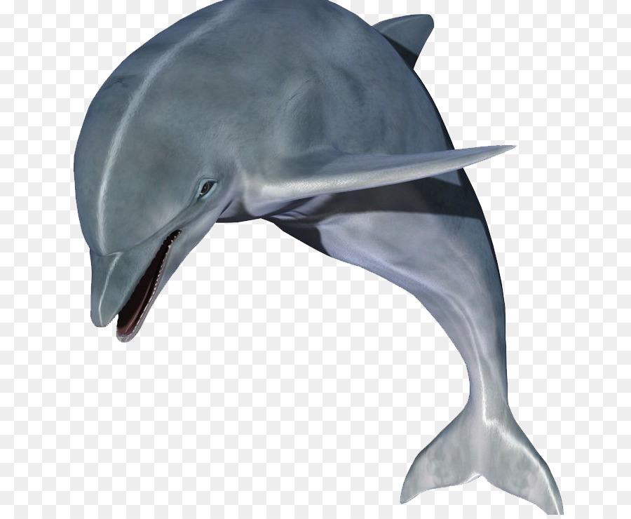 натуральной картинки дельфины на белом фоне если совсем заиграется
