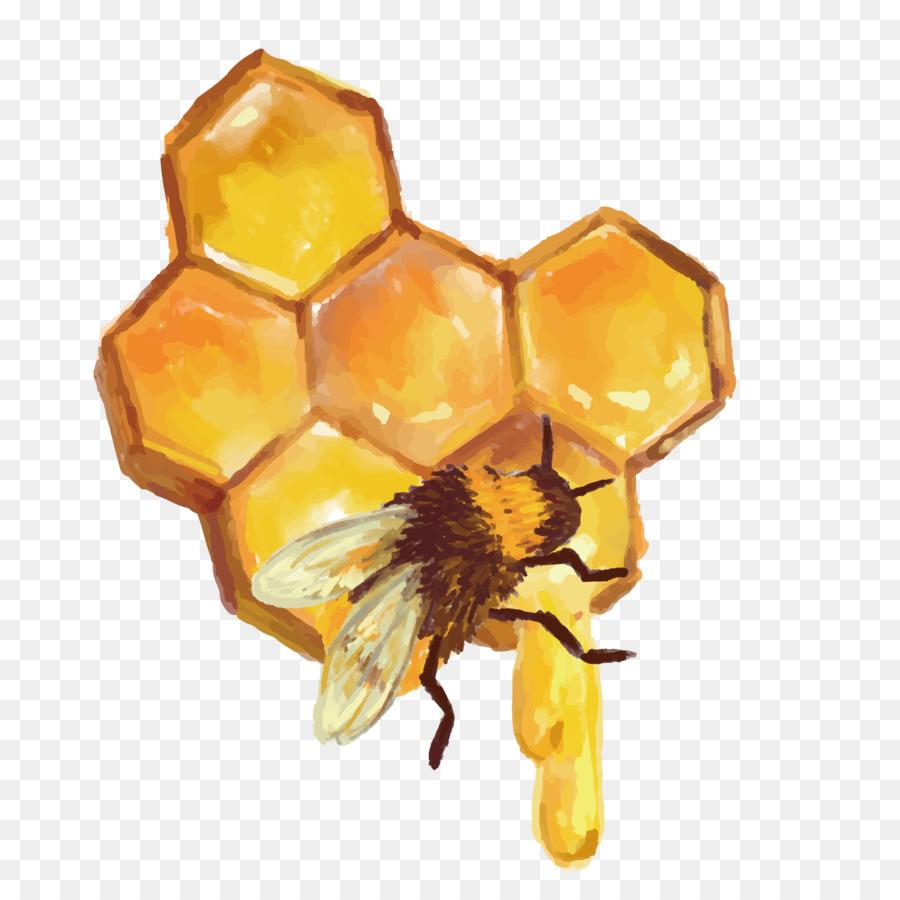 Пчелиные соты картинки пнг