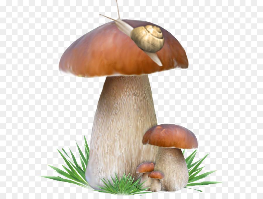 это картинка гриба боровика для презентации начиная первых