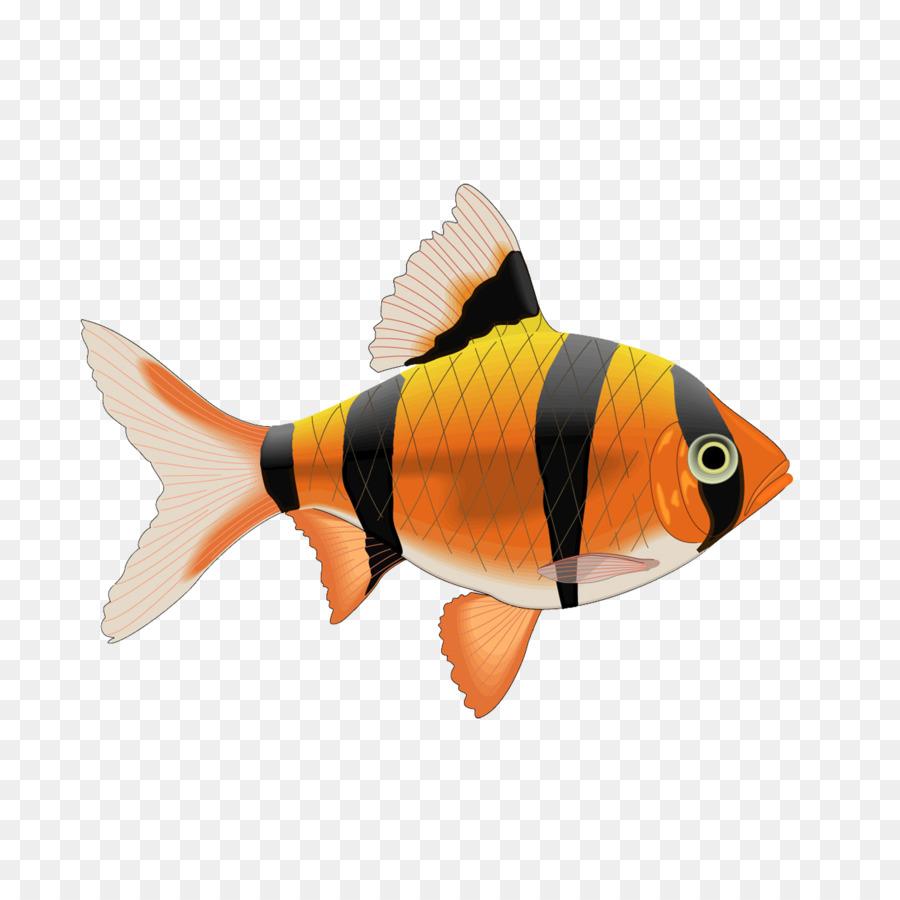 рыбки для аквариума картинки на белом фоне пациент