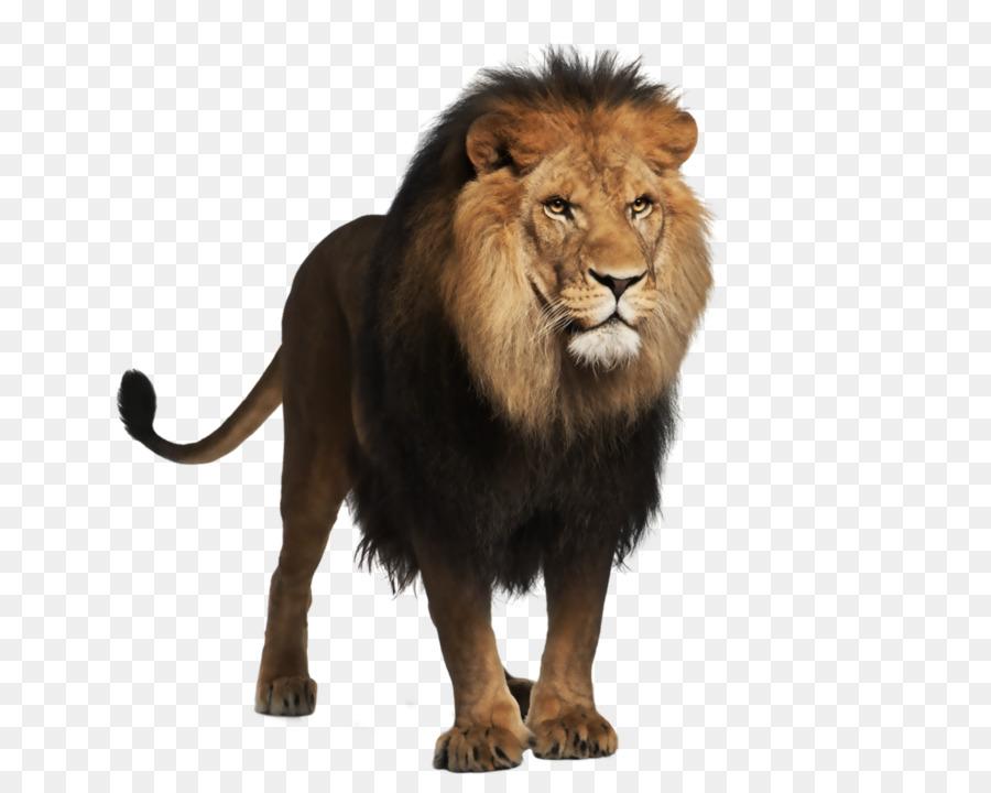 Днем, картинка с изображением льва для детей