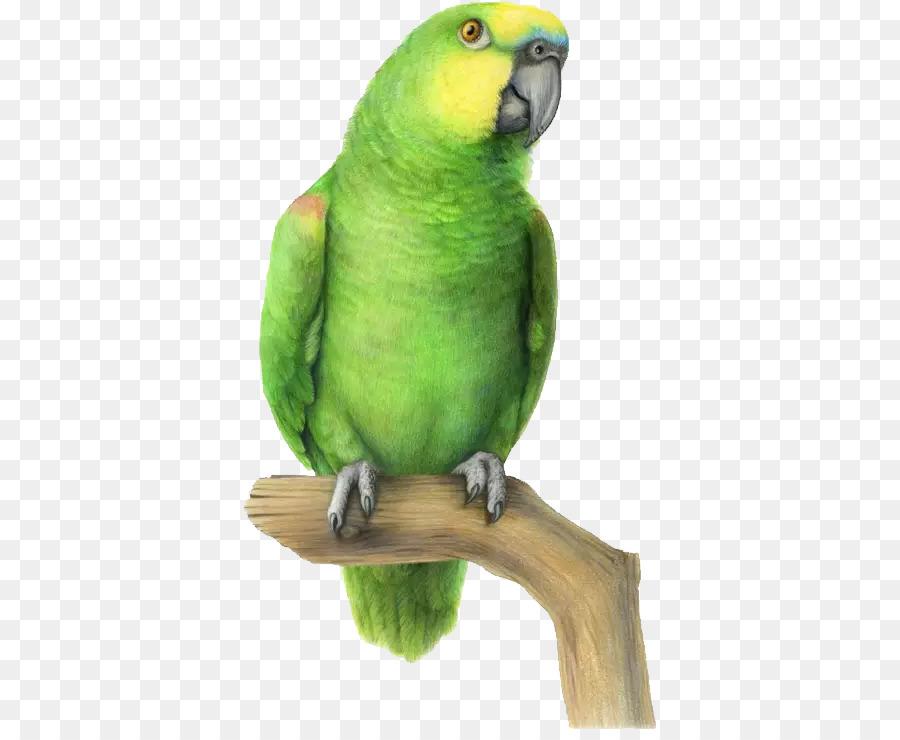 Смешные рисунки про попугаев, смешные