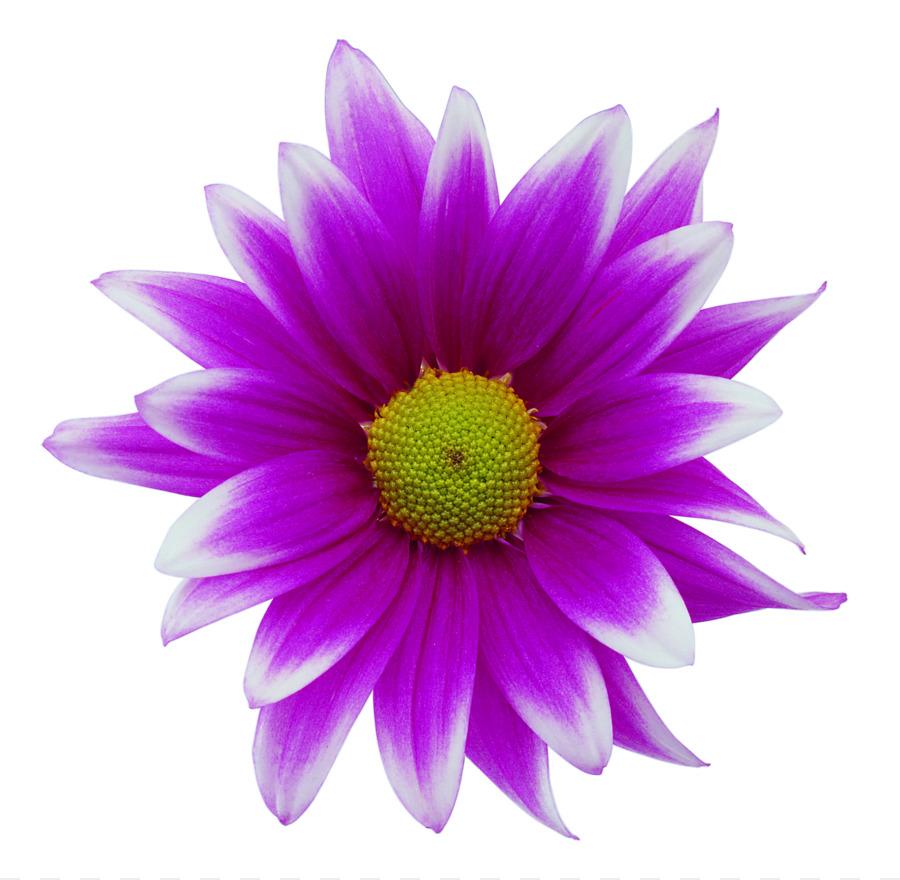 александр скачать картинки одиночных цветов для оформления бараны были