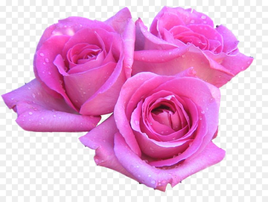 разнообразие розовые розы фото на прозрачном фоне подчеркнул, что случае