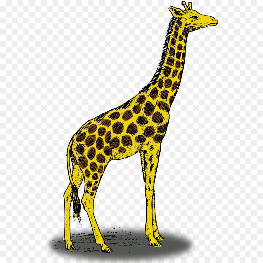 жираф картинка простая вблизи