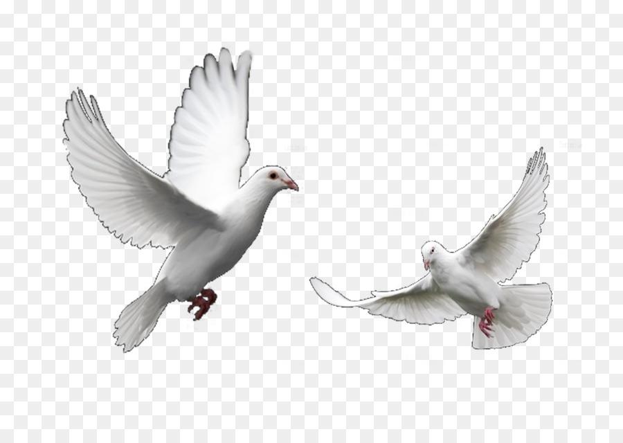 Картинки анимация голуби летят