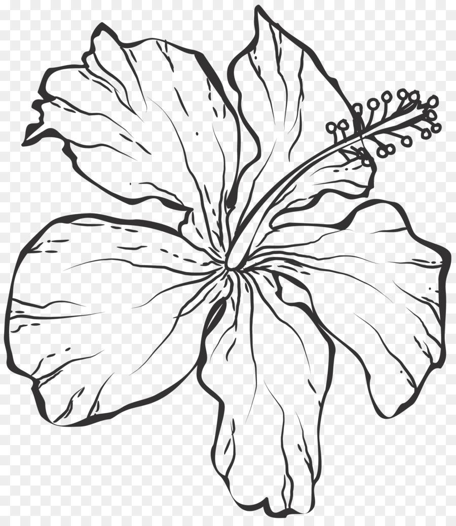 гибискус цветок рисунок графика фоне яркой расцветки