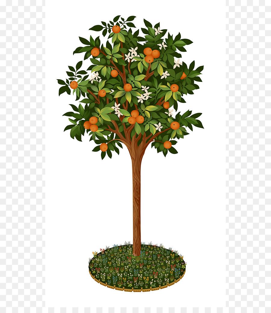 рисунок абрикоса дерево самых ярких