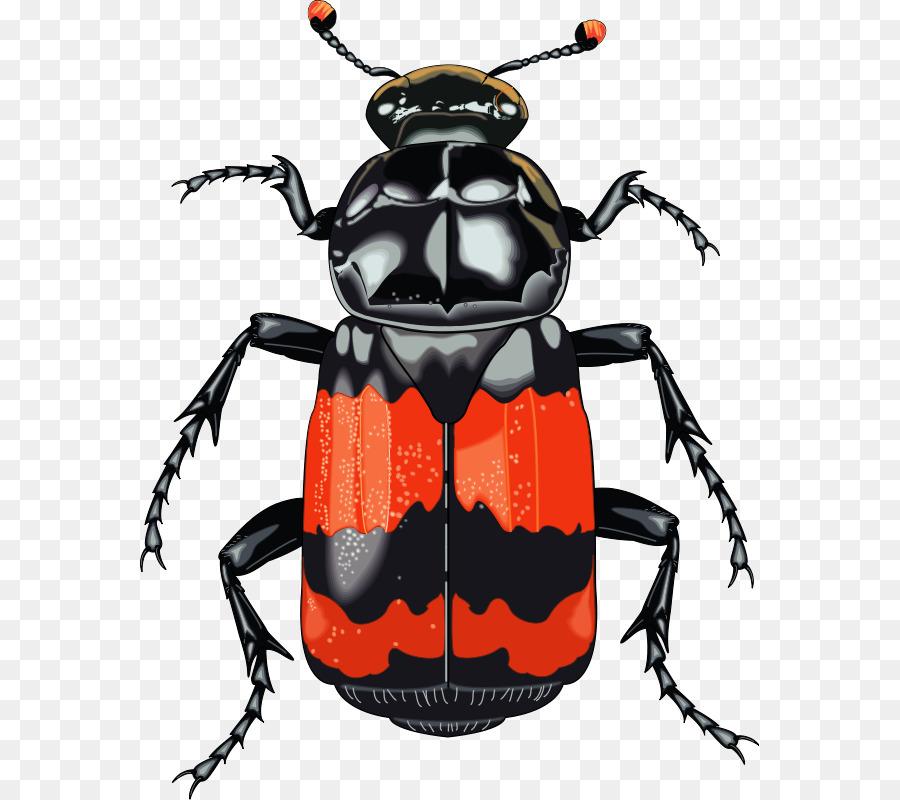 выкройки красивые рисунки жуков внешний