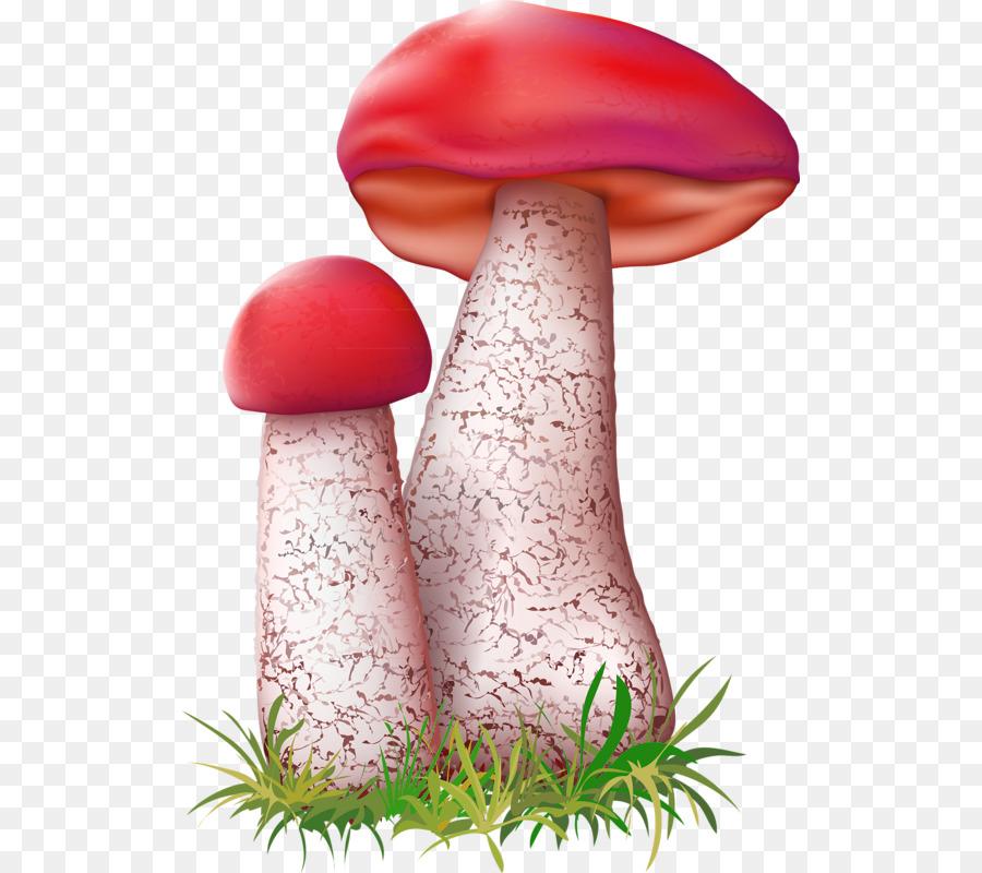 Картинки грибов подосиновик для детей нарисованные цветные