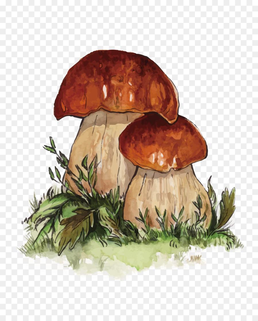 Картинка белого гриба рисунок