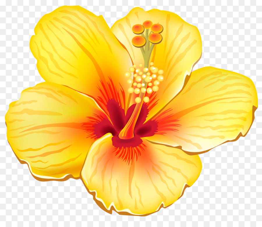Клипарт картинки цветы