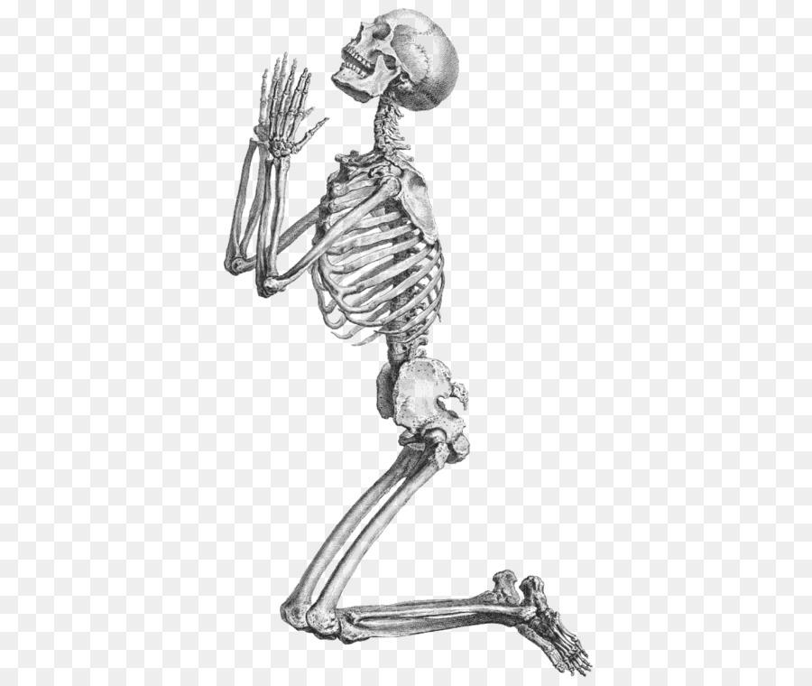 Скелет человека картинки веселые передал джулаю