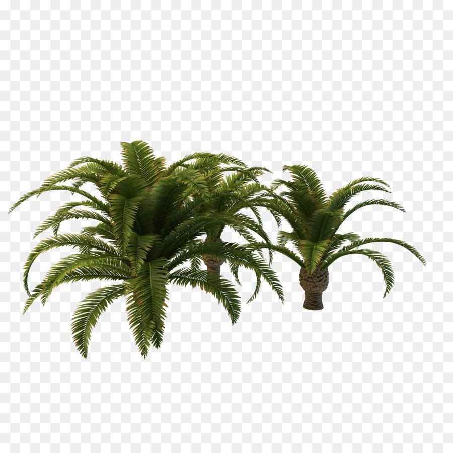 Arecaceae,