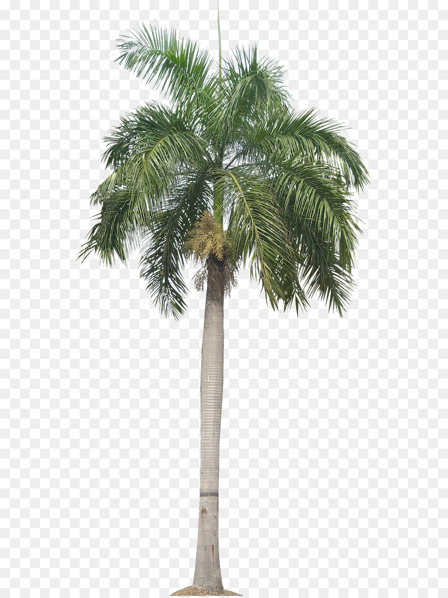 Панама,