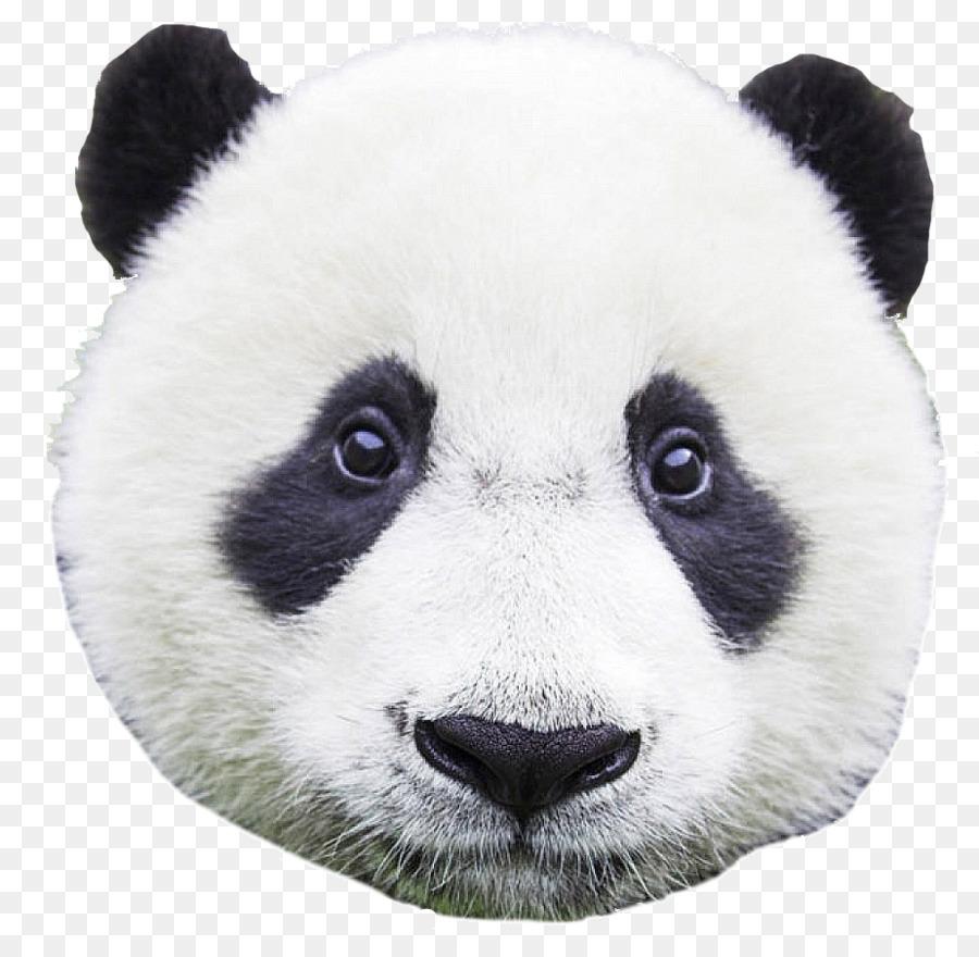 Морда панда картинки