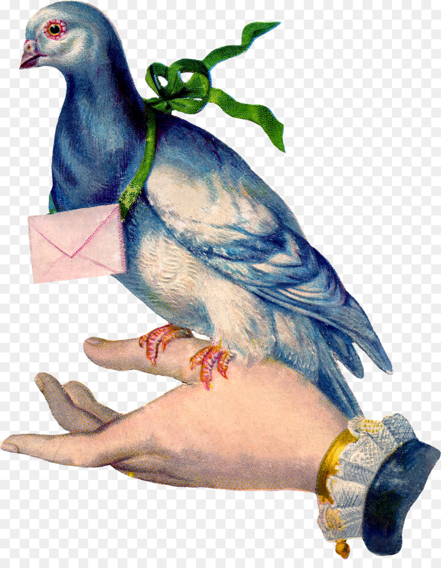 Открытка голубь с письмом