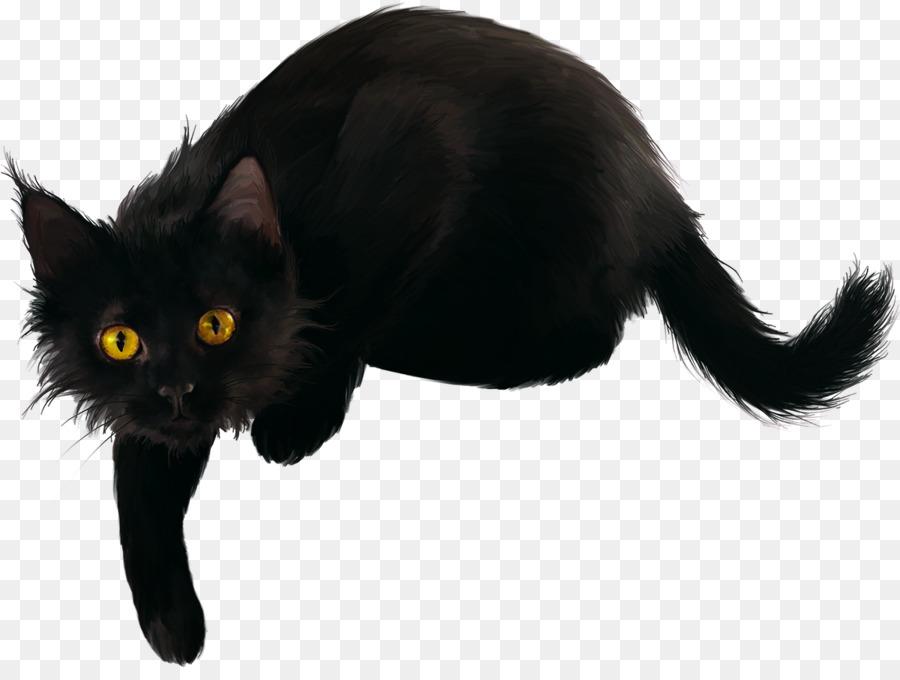 картинка черного кота без фона поверхности миндалин превращается