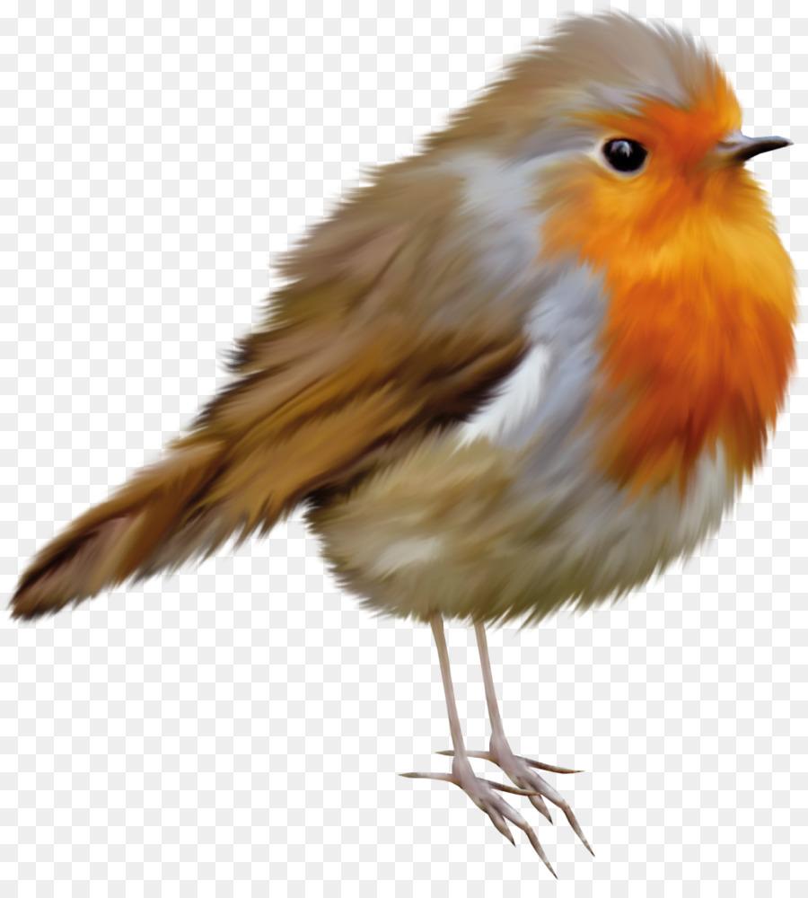 Птицы картинки клипарт на прозрачном фоне