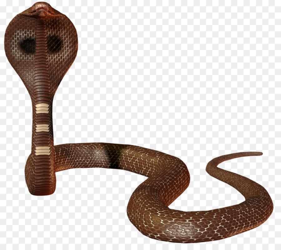 Картинка змеи на прозрачном фоне