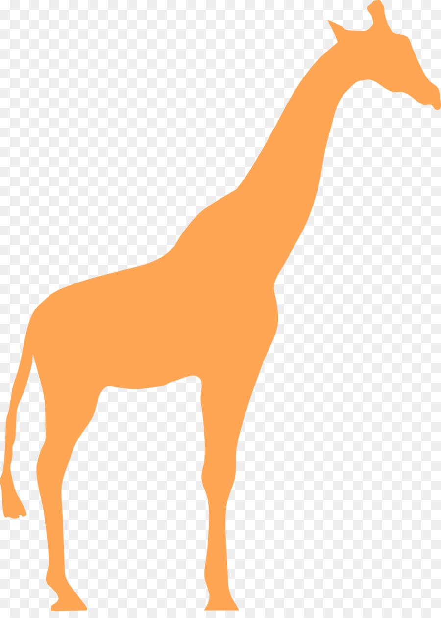 Картинки жирафа без пятен для детей