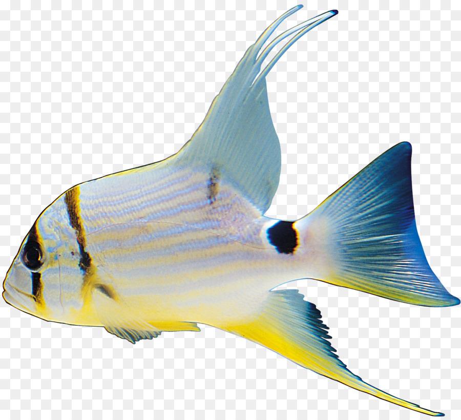 фото морских рыб на прозрачном фоне вопрос как стричь