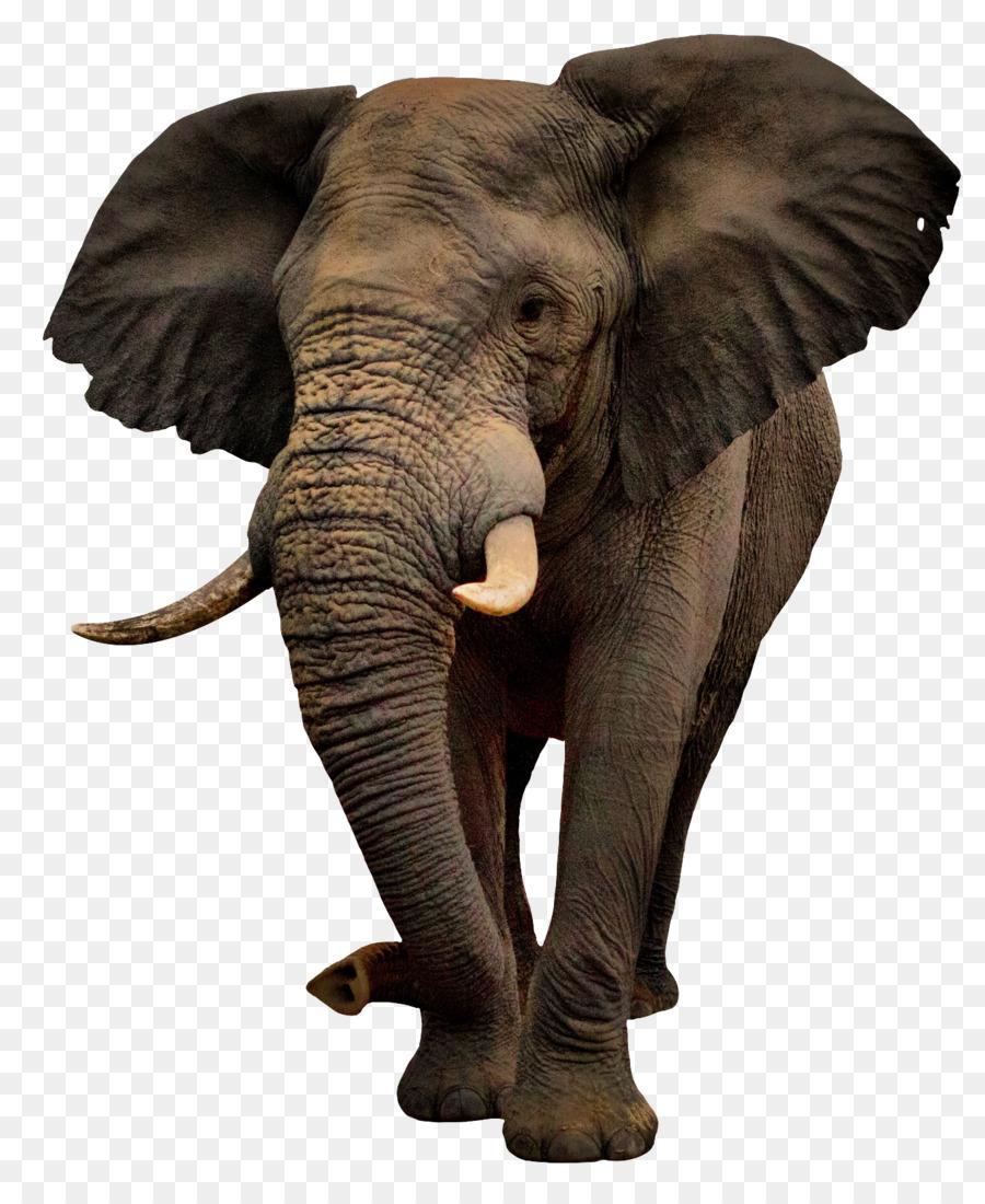 Рабочий стол, слон в картинках на прозрачном фоне
