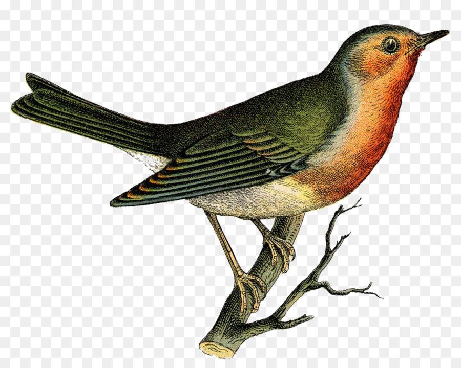 Картинка птица юрок для детей