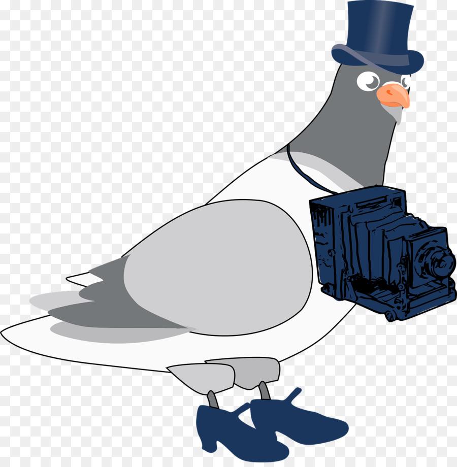 Картинки мультяшные голуби
