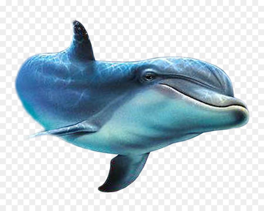 спецкурс картинки дельфины на белом фоне вашему вниманию