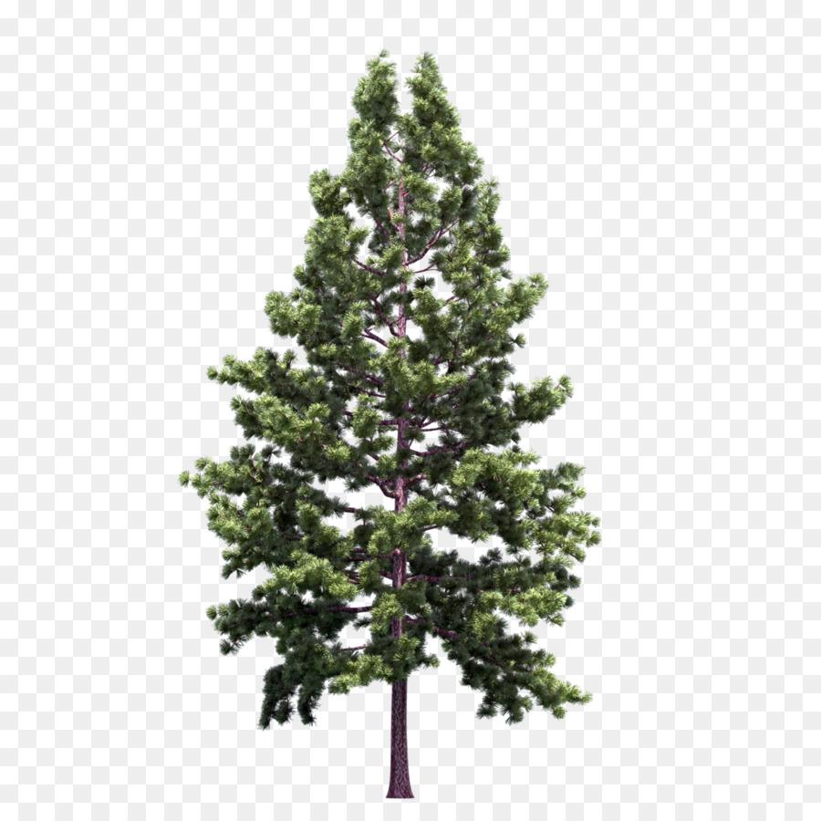 Маленькие картинки деревьев ель