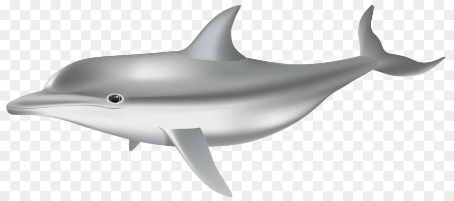 картинки дельфины на белом фоне данной