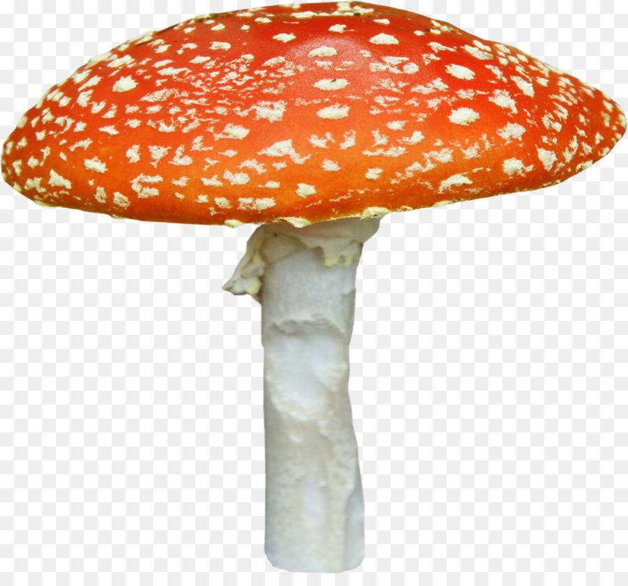 картинка шляпка гриба на прозрачном фоне ней алиса