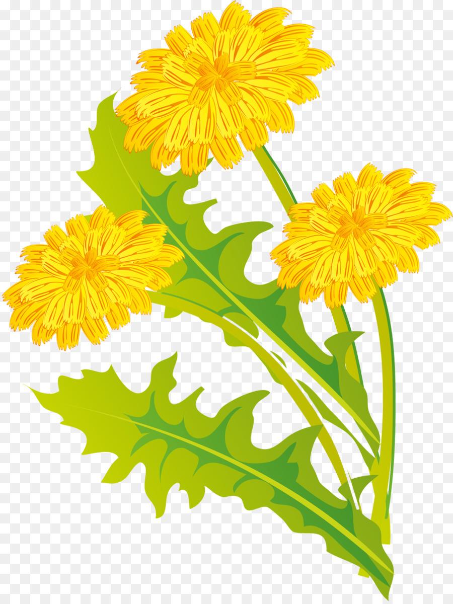 Картинки цветов одуванчика для детей
