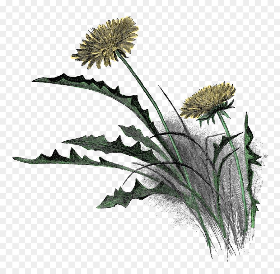 Рисунок трава и цветы карандашом