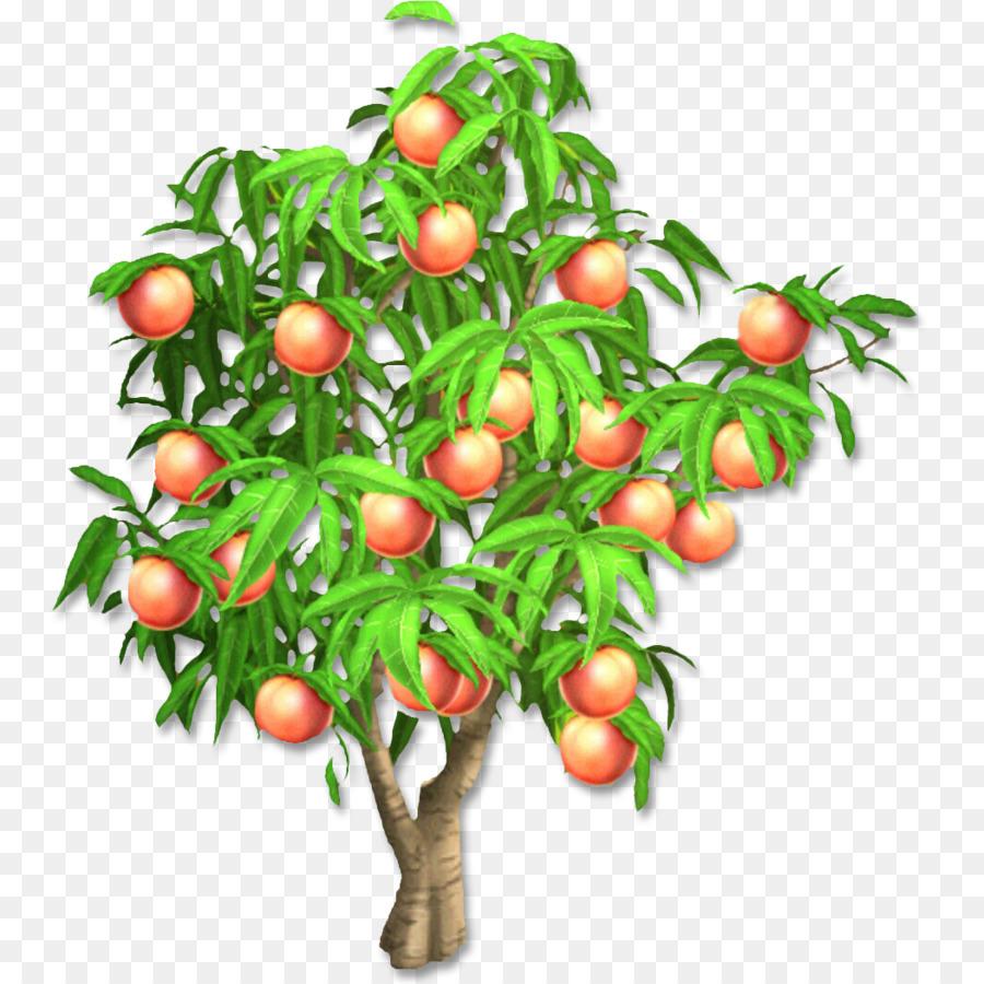 Картинки фруктовых деревьев с плодами для детей с названиями