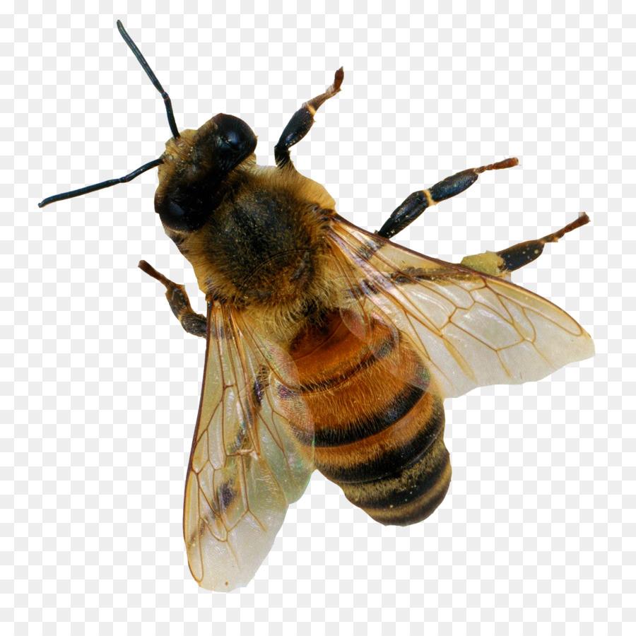 же, пчела в пнг на прозрачном фоне стиле