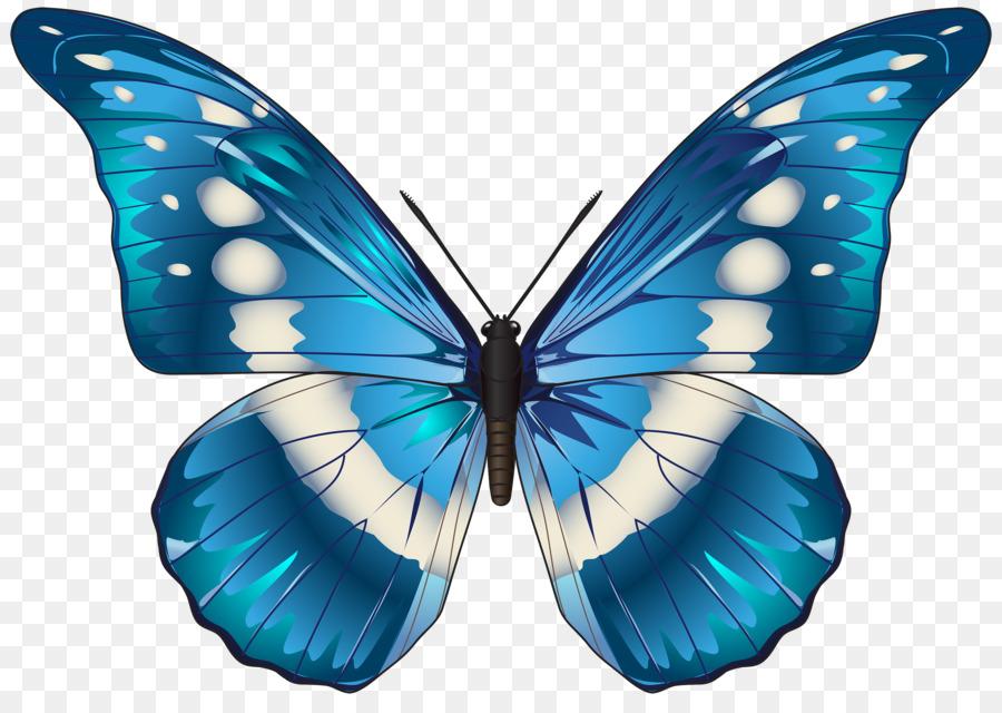 Картинка на белом фоне бабочки