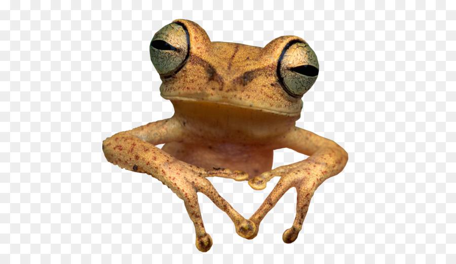 Анимация лягушки в фотошопе