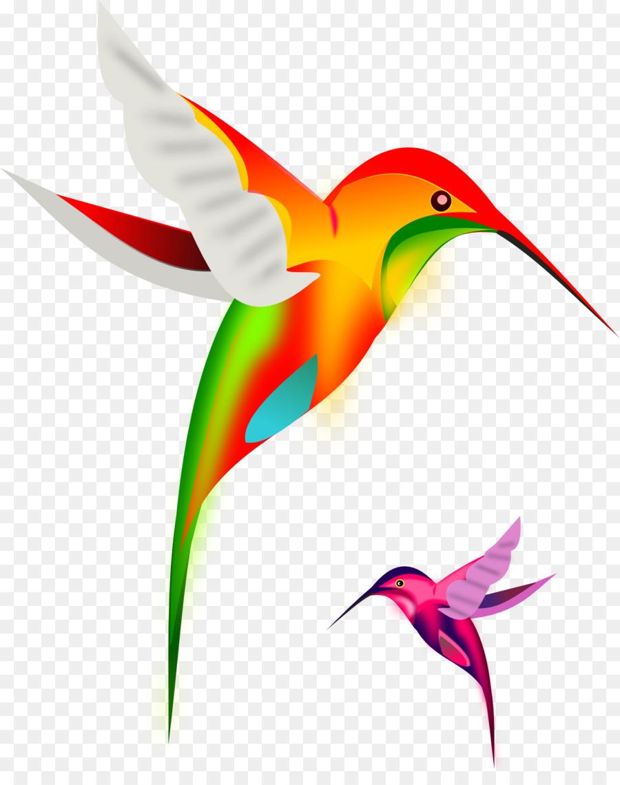 Картинка птицы колибри для детей